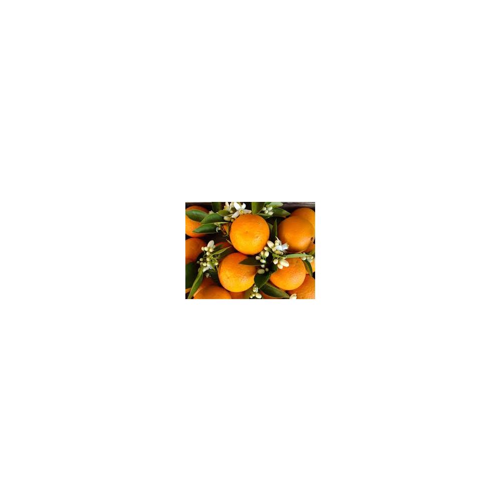 Huile essentielle d'orange douce zeste