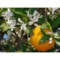 Eau Florale - Oranger Fleurs Bio