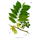 Huile essentielle d'ylang ylang complète
