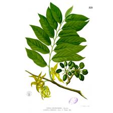Huile essentielle d'ylang ylang complète