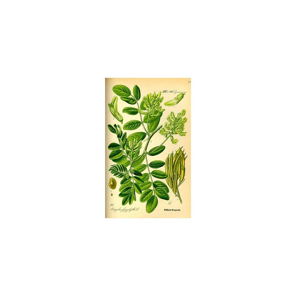 Astragale Bio comprimés