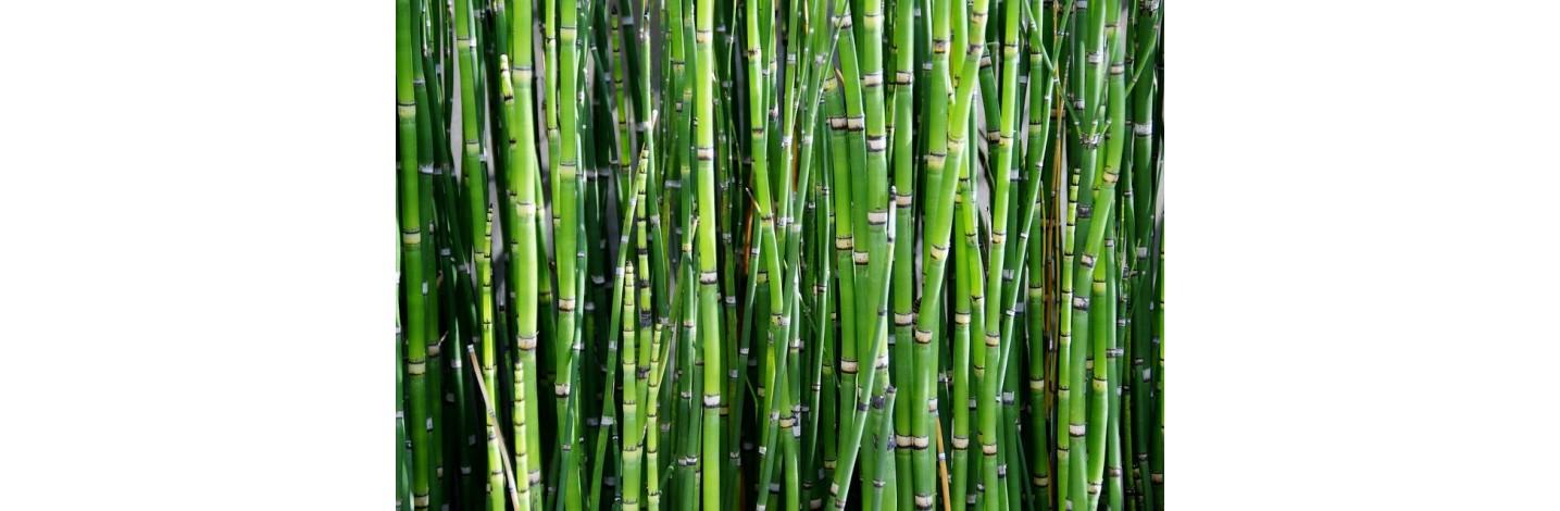 Produits écologiques en bambou pour Maison & Jardin - ConsomActeurs